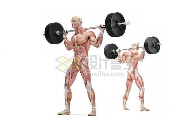 两款男性人体肌肉模型正在杠铃颈后推举健身房动作9775868图片免抠素材
