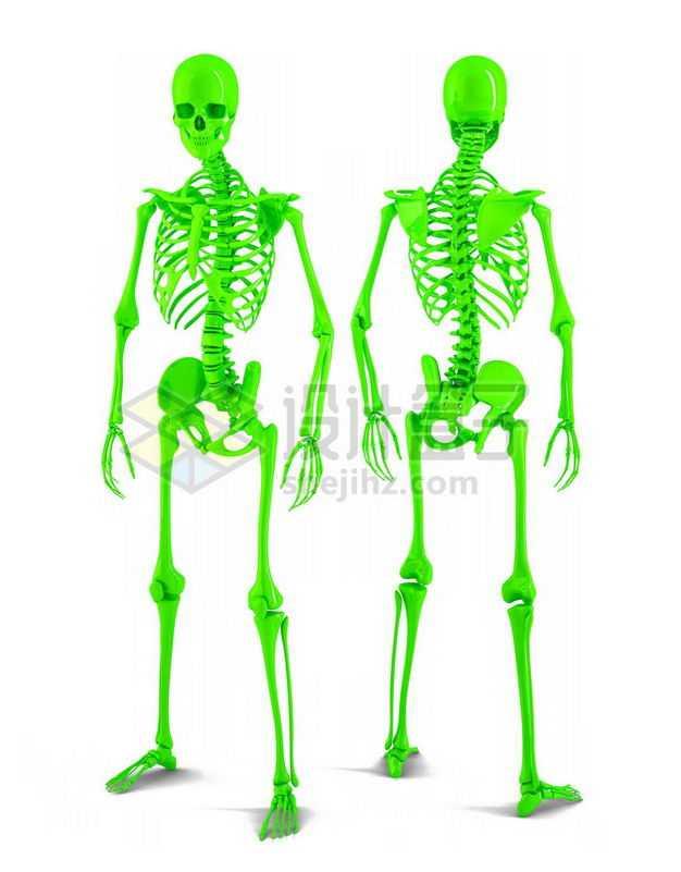 3D立体绿色骨架塑料人体模型4269856图片免抠素材