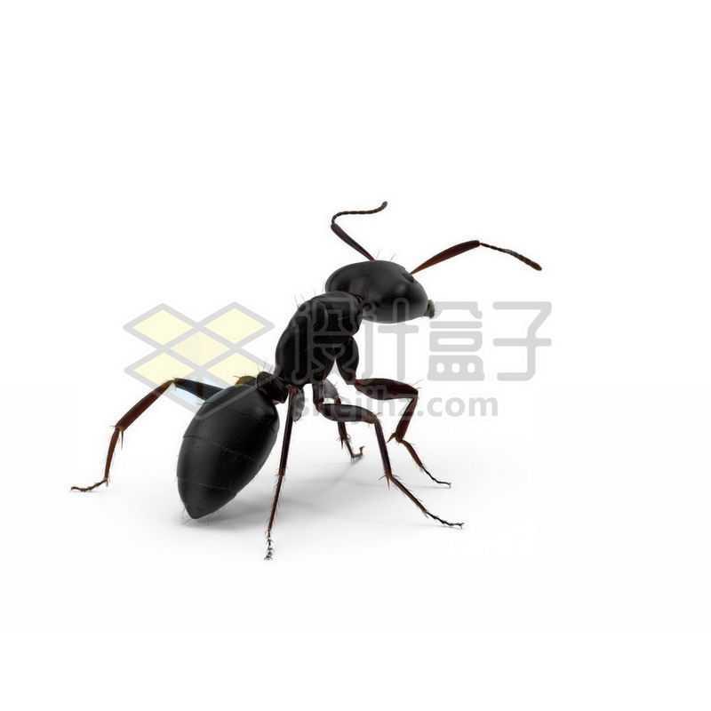 3D立体高清小蚂蚁小动物9370123图片免抠素材