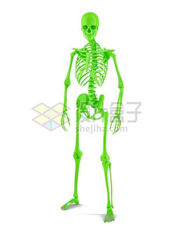 3D立体绿色人体骨架骨骼塑料人体模型7387978免抠图片素材