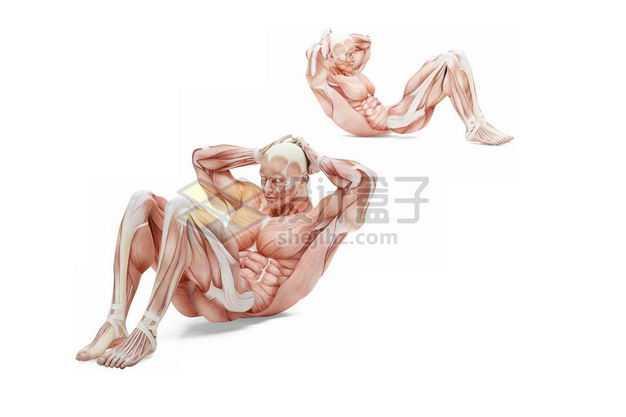 3D立体做仰卧起坐健身锻炼的人体肌肉组织示意图8744957免抠图片素材