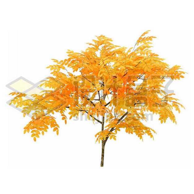 秋天树叶黄了的无患子大树4176117PSD图片免抠素材