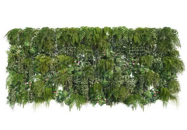 茂盛的热带树叶蕨类植物叶子组成的植物墙装饰5429721图片免抠素材