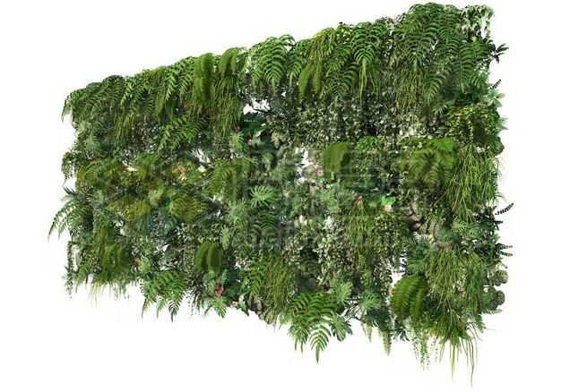 茂盛的热带树叶蕨类植物叶子组成的植物墙装饰7862911图片免抠素材