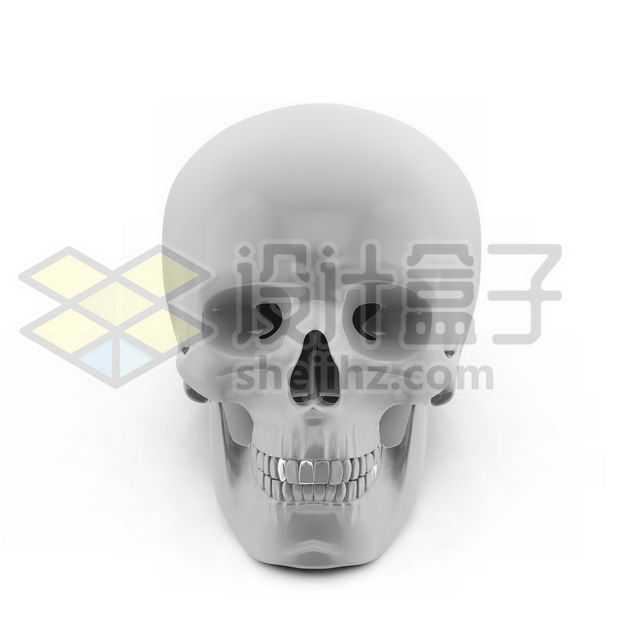 逼真的3D立体白色骷髅头人体骨骼正面图5163915图片免抠素材