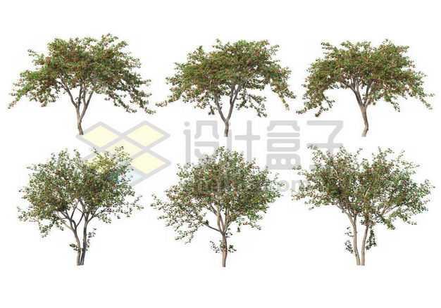 六棵杨树毛白杨大树树绿植园林植被观赏植物3502493图片免抠素材