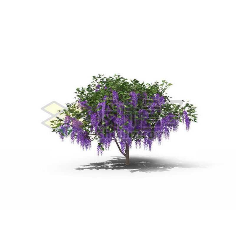 一棵春天夏天的紫藤景观树木绿色大树3704157图片免抠素材
