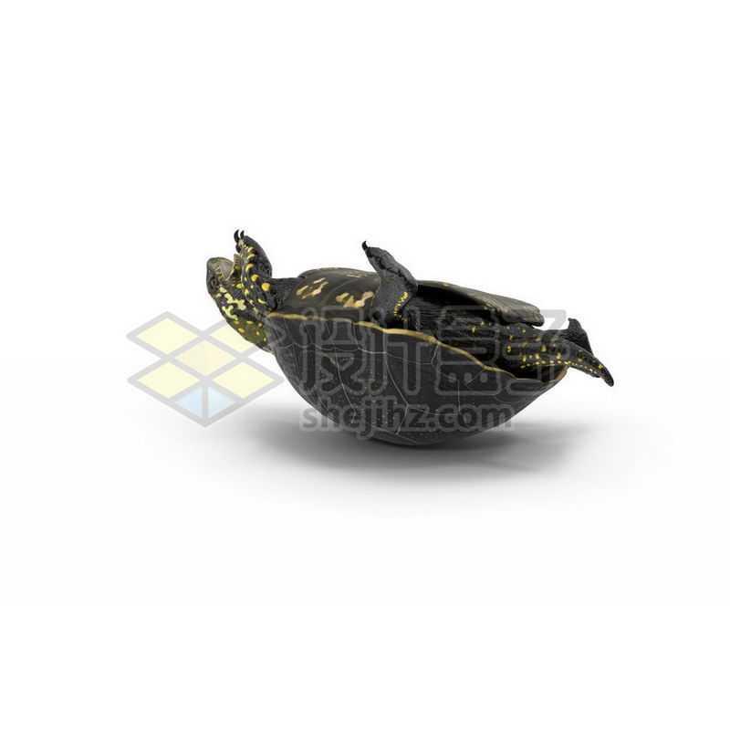 3D立体高清翻不了身的乌龟花龟小动物1146063图片免抠素材