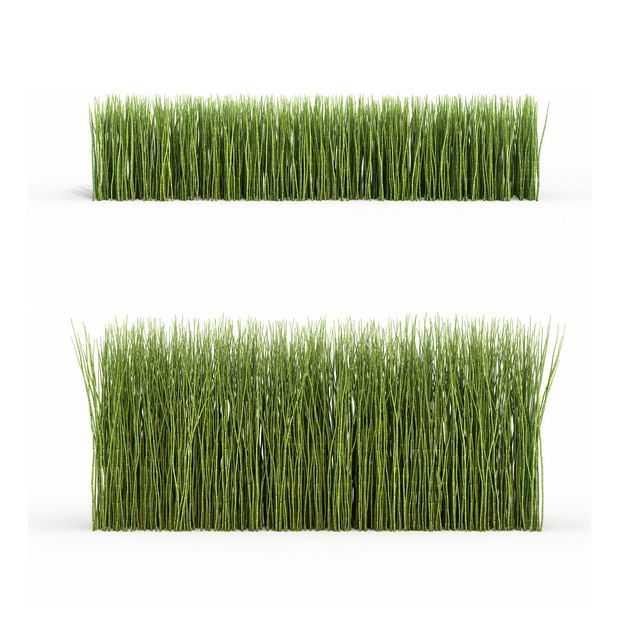 两款3D渲染的木贼观叶植物绿植观赏植物9552513png图片免抠素材