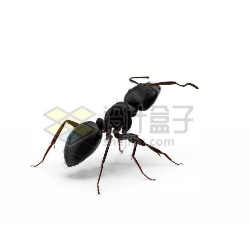 3D立体高清小蚂蚁小动物6453403图片免抠素材