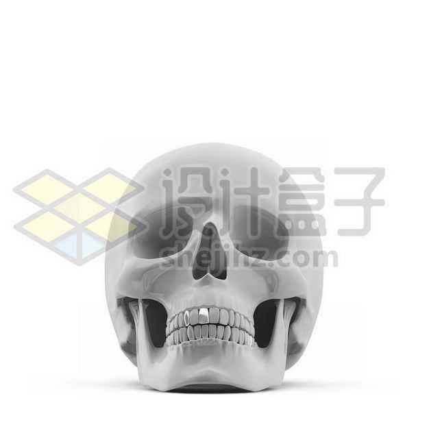 逼真的3D立体白色骷髅头人体骨骼正面图2210699图片免抠素材