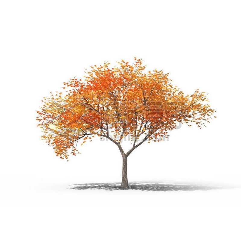 一棵秋天金黄色的胡杨景观树木大树6013224图片免抠素材