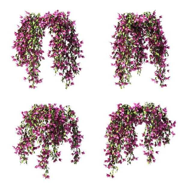 四款3D渲染的紫藤盆栽绿植观赏植物5198113png图片免抠素材