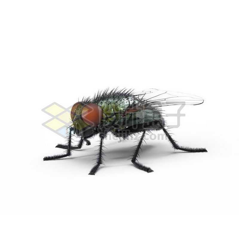 3D立体高清苍蝇小动物1197570图片免抠素材