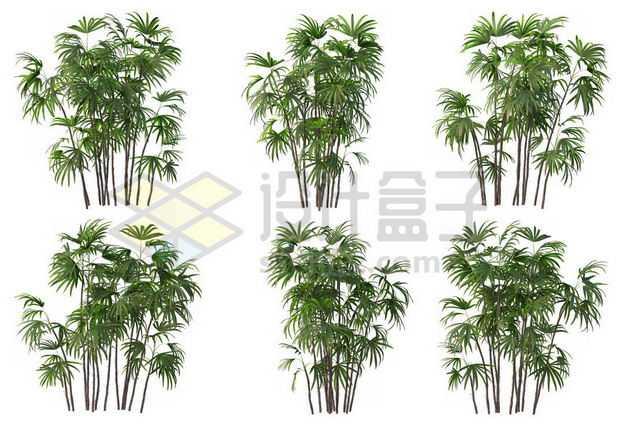 六丛郁郁葱葱的多裂棕竹绿植园林植被观赏植物8308007图片免抠素材