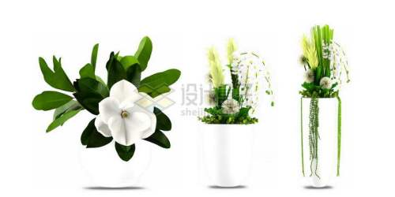 三款花瓶中的鲜花绿色植物观赏植物2600842图片免抠素材