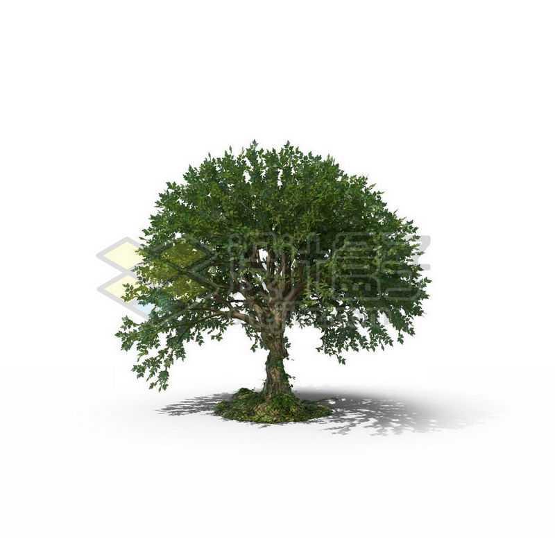 一棵春天夏天的榆树景观树木绿色大树8360493图片免抠素材