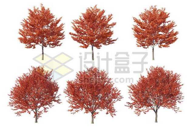 六棵红枫树大树树绿植园林植被观赏植物3144425图片免抠素材