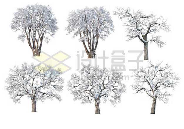 六款冬天积雪的大树等冬季雪景6567223图片免抠素材