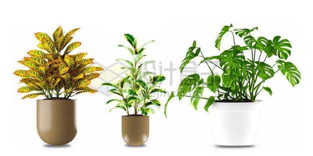 三款花盆中变叶木鱼尾葵龟背竹的室内观赏植物5156913PSD图片免抠素材