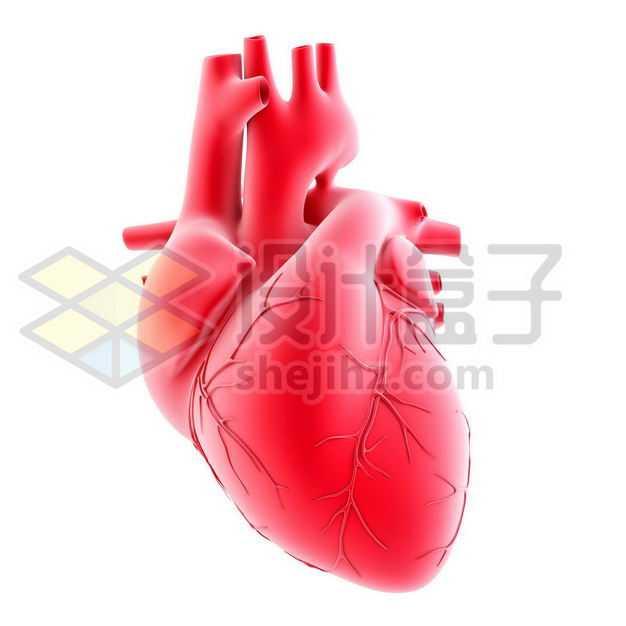 3D立体红色心脏人体器官模型侧面图3393054图片免抠素材