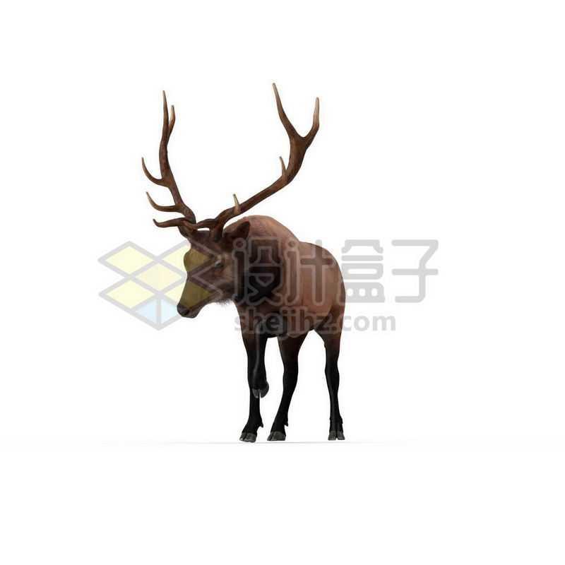 3D立体高清驯鹿野生动物2799543图片免抠素材