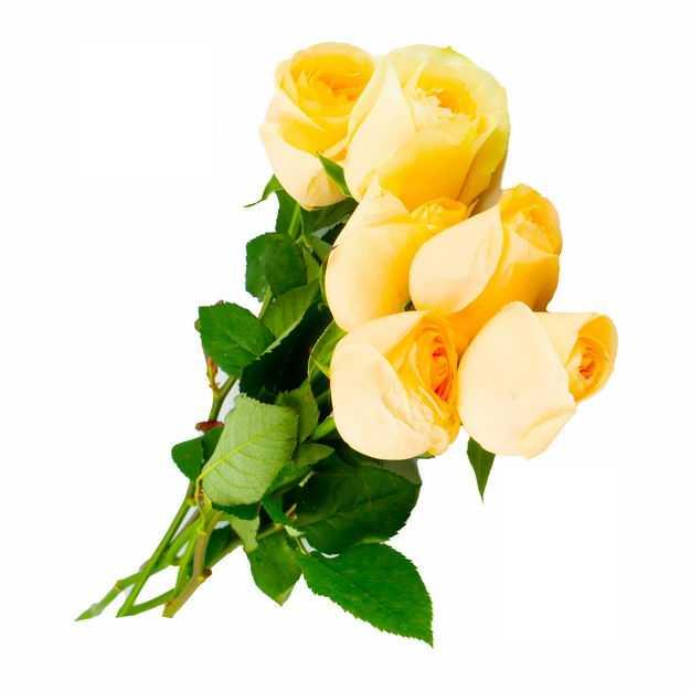 一束带叶子的黄玫瑰花鲜花黄色花朵544363png图片免抠素材