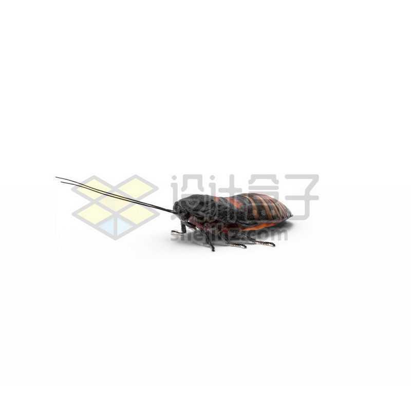 3D立体高清土鳖虫小动物3276331图片免抠素材