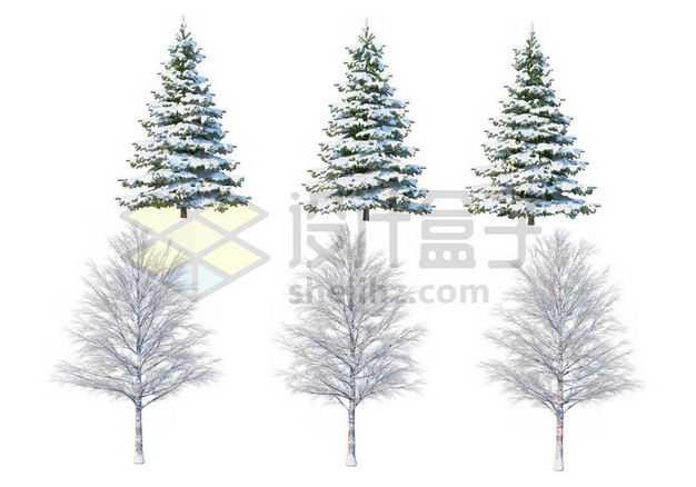 六款冬天积雪的大树雪松等冬季雪景2817989图片免抠素材