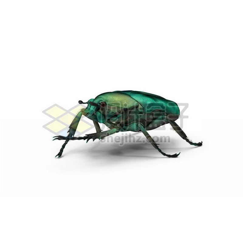3D立体高清金龟子甲虫小动物4554939图片免抠素材