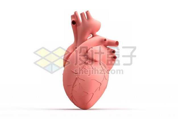 3D立体粉红色心脏人体器官模型侧面图1375733图片免抠素材