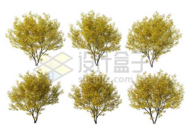 六棵金枝国槐榉树大树树绿植园林植被观赏植物5312096图片免抠素材