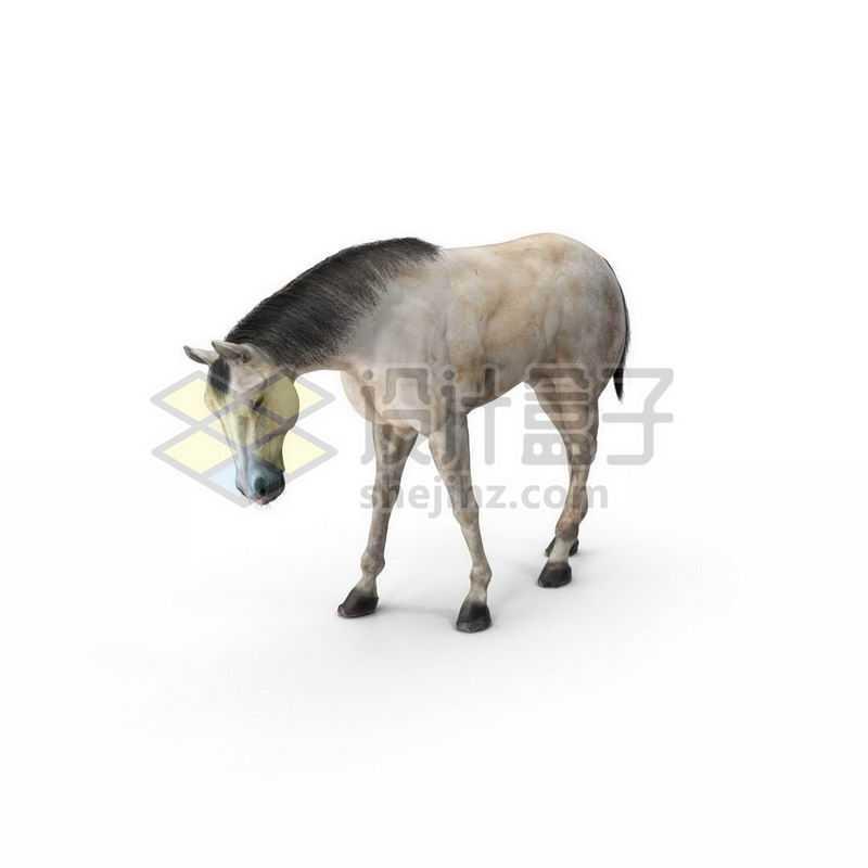 3D立体高清低头的白色骏马1066304图片免抠素材