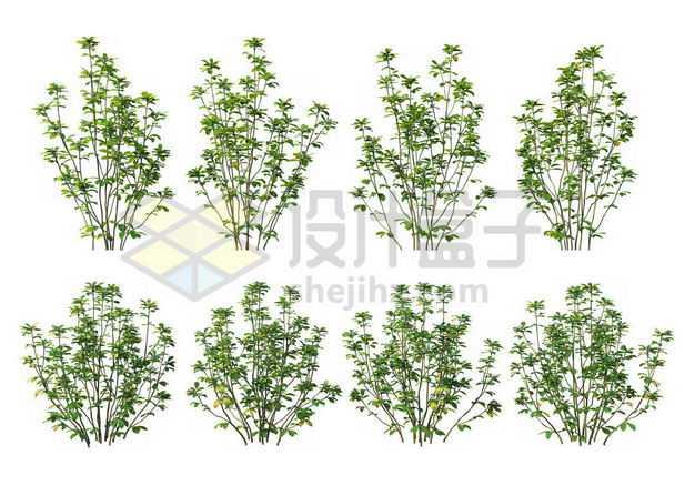 八棵厚朴树枝大树树绿植园林植被观赏植物4045059图片免抠素材