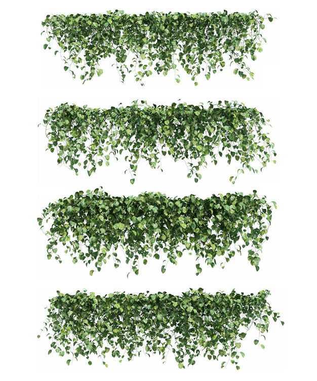 四款常春藤观赏植物园林绿植6987940免抠图片素材