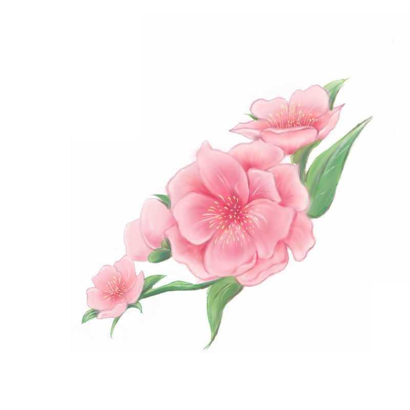 盛开的桃花水彩画7629391图片免抠素材