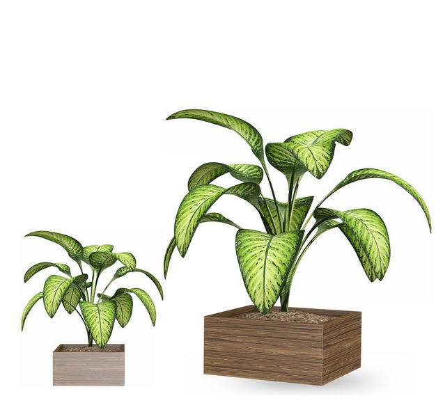 两款花叶万年青黛粉叶盆栽绿植观赏植物9101694免抠图片素材