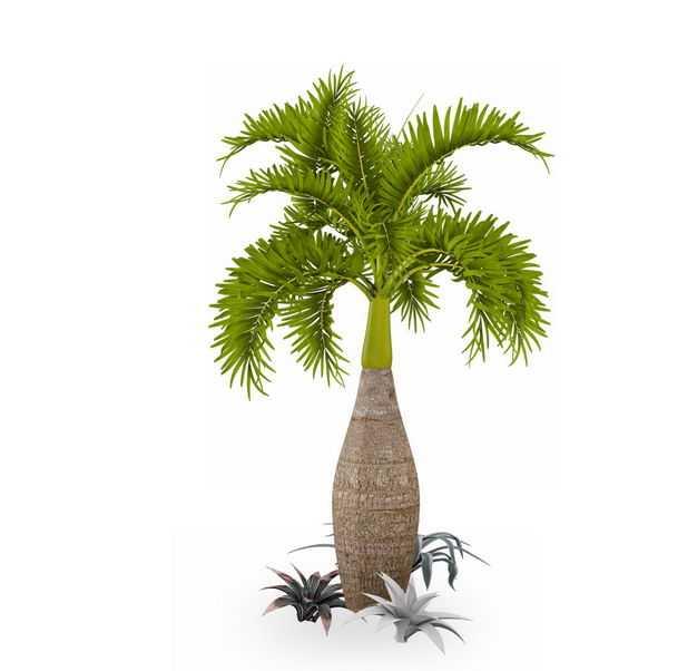 酒瓶椰子树盆栽绿植观赏植物5293604免抠图片素材