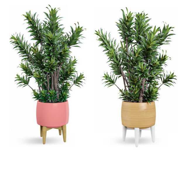 两款艺术风格花盆中的红豆杉盆栽植物观赏植物7674465免抠图片素材