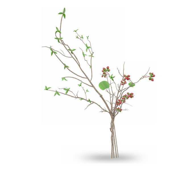 刺桐枸杞盆栽绿植观赏植物7369329免抠图片素材