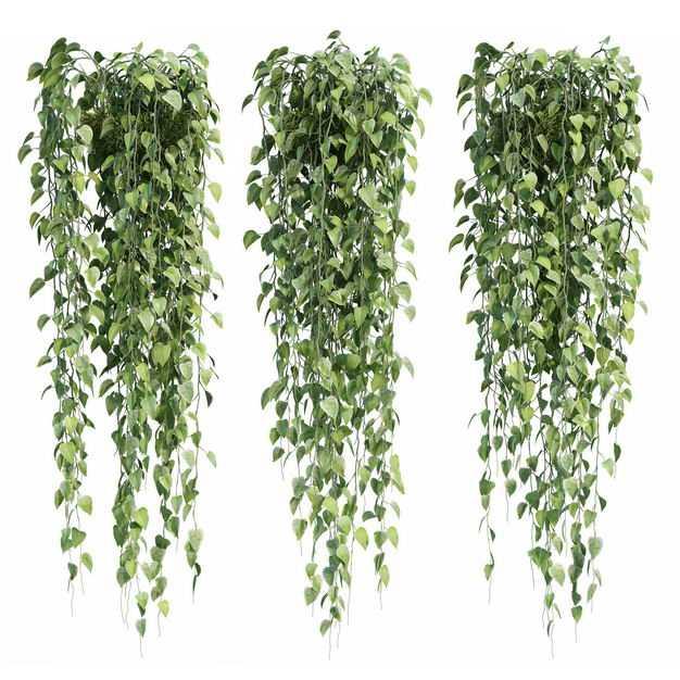 三款绿萝观赏植物园林绿植7708875免抠图片素材
