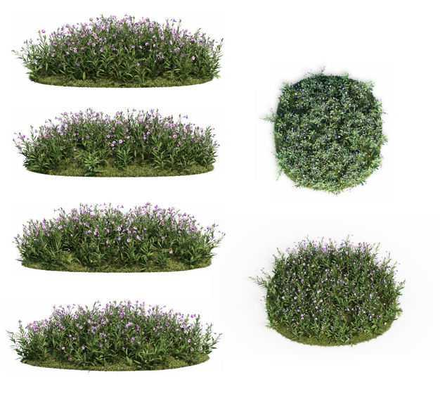 六款蓝花草绿植园林植被观赏植物8355425免抠图片素材