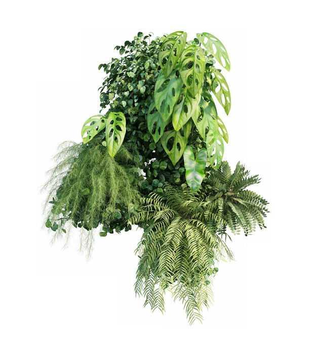 各种热带植物的绿叶组成的装饰5023555免抠图片素材
