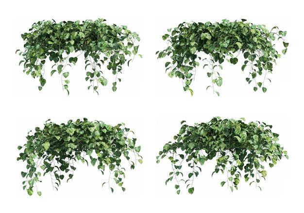四款绿萝绿色植物盆栽植物装饰6037333免抠图片素材 生物自然-第1张