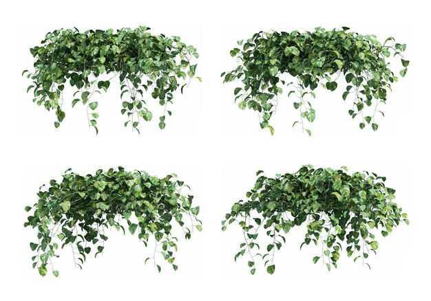 四款绿萝绿色植物盆栽植物装饰6037333免抠图片素材
