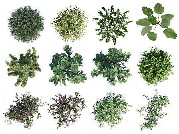 十二款俯视视角的绿植园林植被观赏植物9146531免抠图片素材 生物自然-第1张