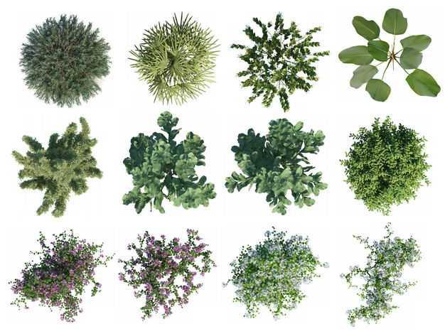 十二款俯视视角的绿植园林植被观赏植物9146531免抠图片素材