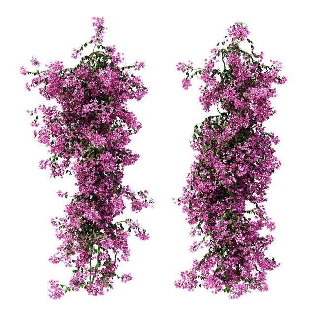 两款叶子花紫茉莉鲜花花卉观赏花2692317免抠图片素材