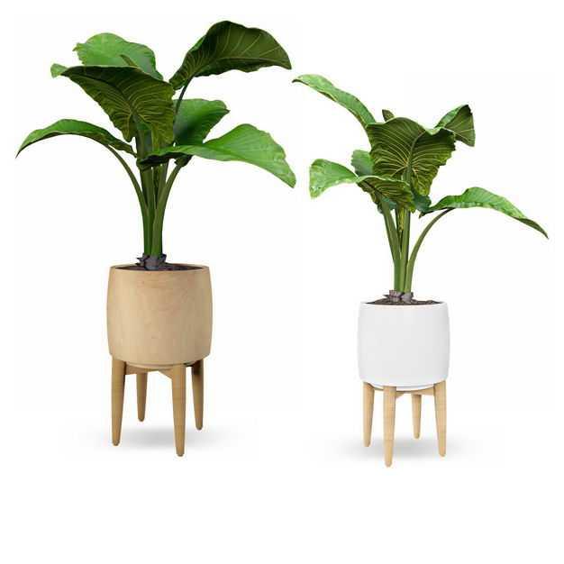 两款艺术风格花盆中的芭蕉树盆栽植物观赏植物9033069免抠图片素材