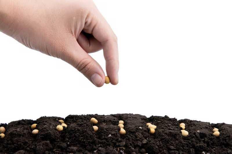 黄豆种子黑土地上播种春季种植2497593png图片免抠素材